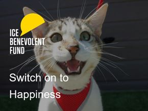 Switch on to happiness cat.jpg